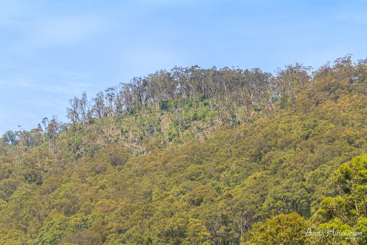 Having obliterated the Lords Ponies farm the tornado carried on over the top of Mount Coolangatta, flattening trees on the northern edge of the hill.