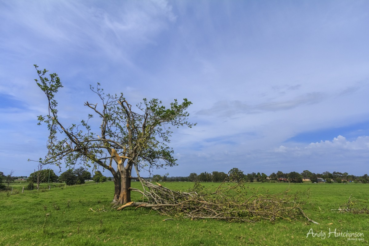Many perfectly healthy trees were snapped like twigs by the winds. This tree managed to stay standing. Just.