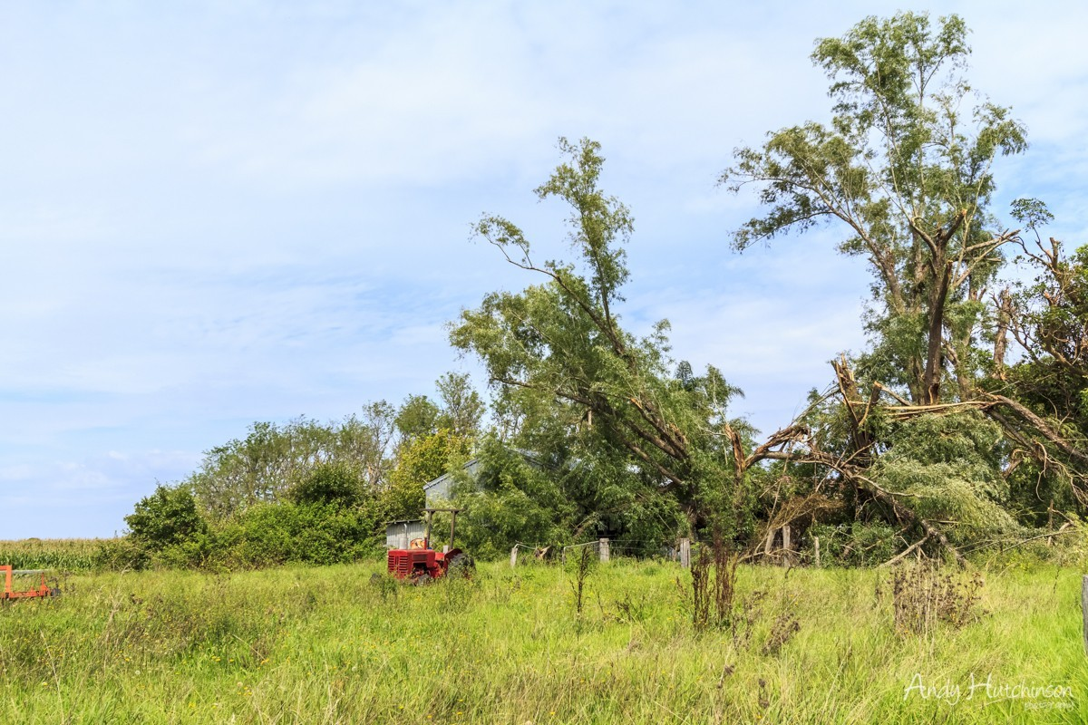 Further down the street in Terrara, the wind parted these trees, snapping them in two before  destroying outbuildings and homes in the village.