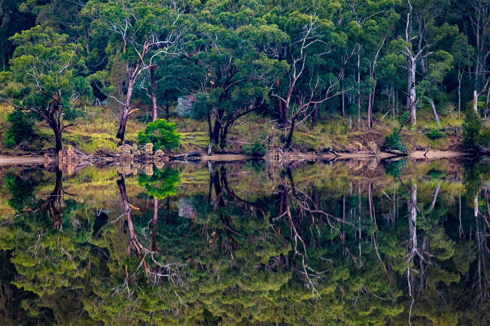 Water like glasss on the Shoalhaven River made for some epic reflections and yes, more symmetry.<i>(July 2016)</i>